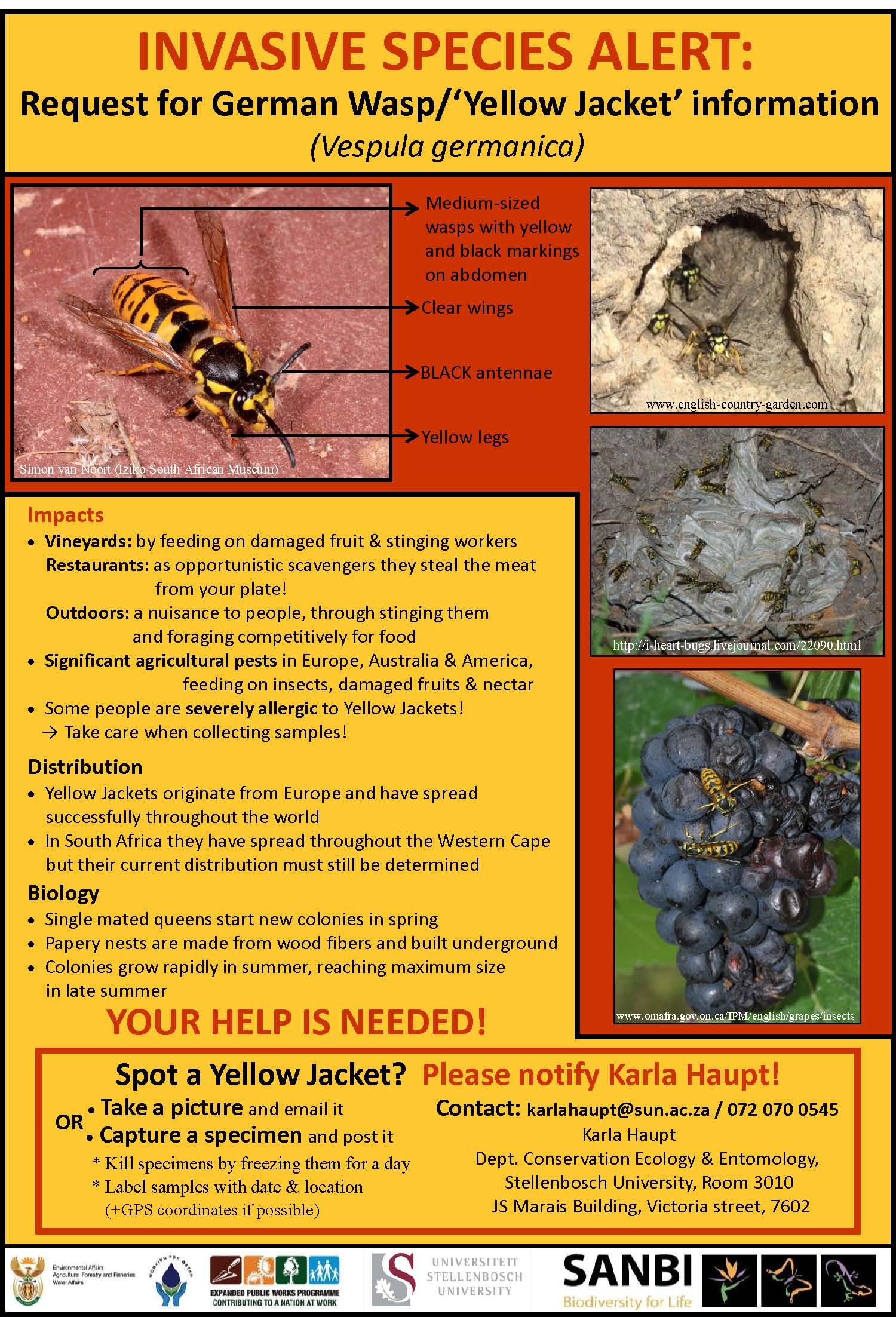 Invasive Wasp Alert.jpg