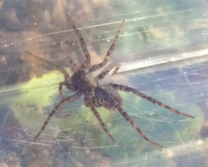 Can someone identify this  spider please?