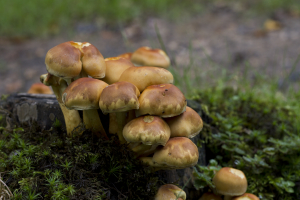 Mushrooms growing on stump near stream, New Forest