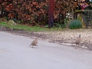 Red legged runners!