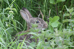 Rabbit by the river Derwent Derby