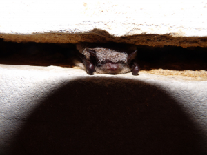another bat for ID please