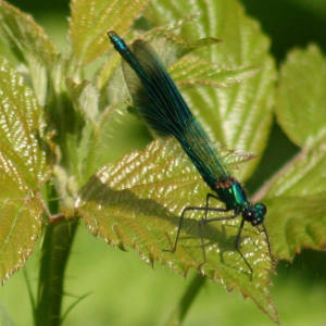 Damselfly at rest