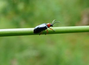 small green & red beetle