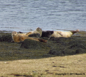 Very relaxed seals