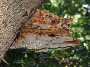 Observation of woodland fungi