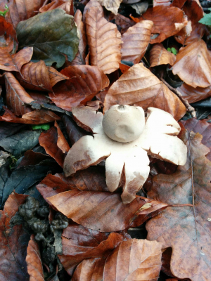 Earth star