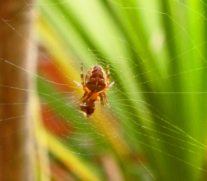 Small Brown Spider