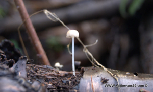 dec 20th llangollen walk fungi nature9