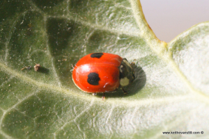 march 23rd ladybird
