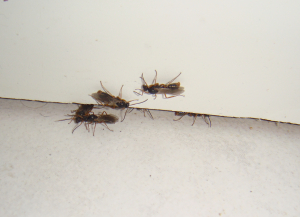 Indoor-Insects