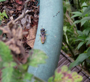 Sawfly (maybe)
