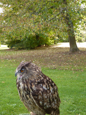 Owl at Hillier Gardens