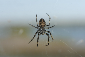 Spider at Dungeness