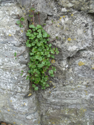 Plant On Wall