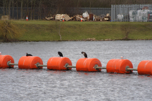 Cormorants on the barrier