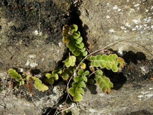Small plant in wall crevice