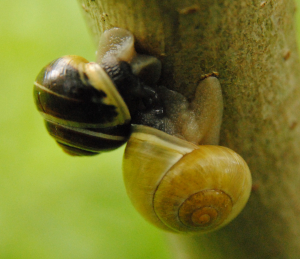 Two snails.