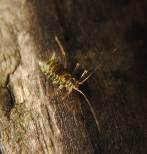 Small mobile creature on a gate (cont.)