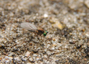 Fly on a wall (3)