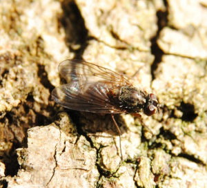 Fly on a tree trunk
