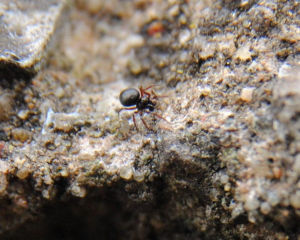 Small black spider running over a wall