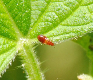 Small red creature on a nettle