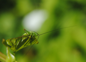 Green insect in low vegetation