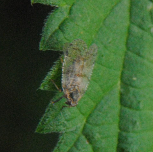 Insect in a shaded area