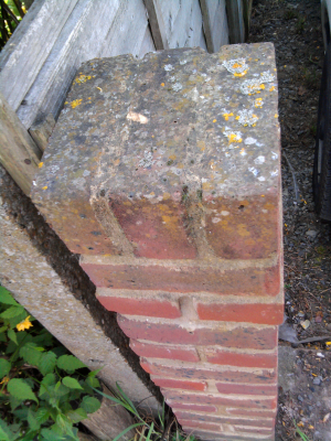 Yellow and grey foliose lichens on weathered bricks