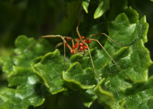 spider and mites