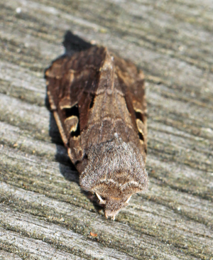 Hebrew Character1