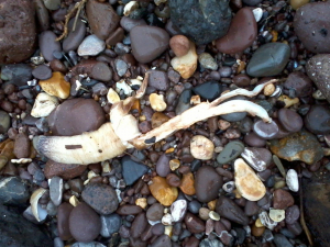 Washed up on beach at Dawlish