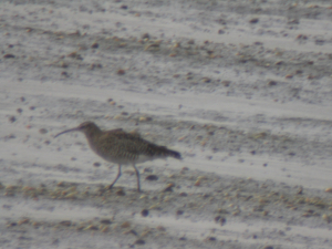 650 320 0 Whimbrel Brands Bay