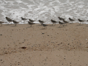 650 650 0 Sanderlings Fishing Cove Gunwalloe 8