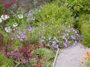 Ui plant Applecross House walled garden 5