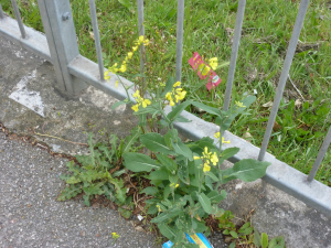 Ui plant nr Red Lion bust stop Blandford Road p2