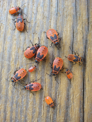 Striking unknown orange beetles on our French holiday?