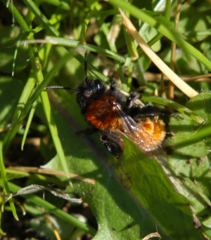Mining Bee - Maybe?