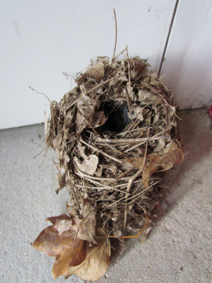 Long tailed tit nest?