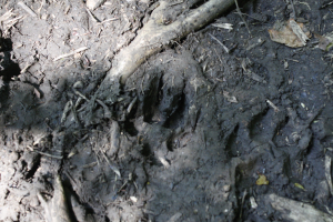 is this a badger track?