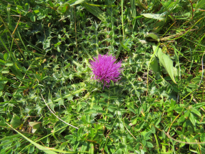 Thistle be the day