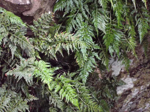 Fern growing in a well